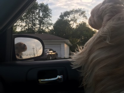 I'm a dog, what can I say? I just love to put my head out the window while you drive up to 40 mph.