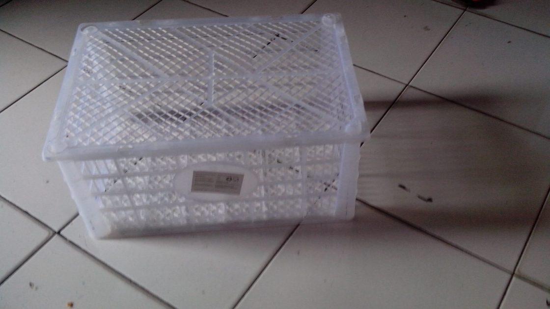 wpid img 20140508 150040 Keranjang Plastik Jual Ayam Hias HP : 08564 77 23 888 | BERKUALITAS DAN TERPERCAYA Keranjang Plastik Keranjang Plastik untuk Pengiriman Ayam Hias Pesanan Mas Chris di Sabang - Aceh