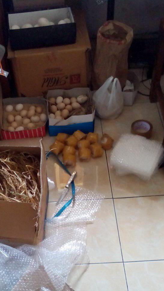 Persiapan sebelum membungkus telur ayam hias