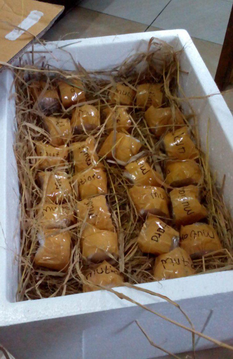 Setiap butir telur ayam hias di bungkus dengan Bubble Plastic berkualitas dan di bungkus lagi dengan Tape Plack Ban Coklat sehingga kondisi telur lebih kuat dan aman terjaga