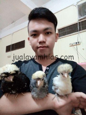 wpid img 20141109 1251071 Telur Ayam Polan Jual Ayam Hias HP : 08564 77 23 888 | BERKUALITAS DAN TERPERCAYA Telur Ayam Polan Telur Ayam Polan Sukses di Tetaskan Mas Erwin di Palembang
