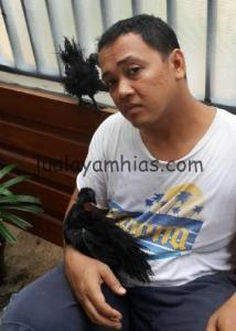 Ayam Cemani Walik Pindah Kandang di Tempat Pak Agung di Kebayoran Baru Jakarta Selatan