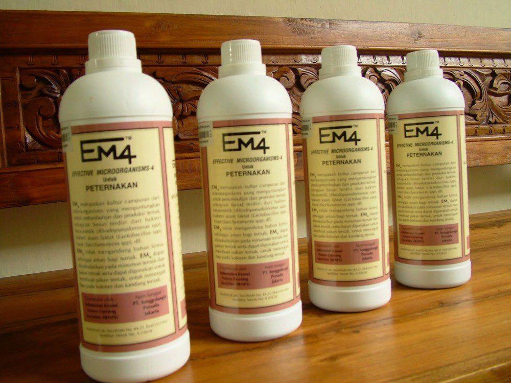 Fungsi EM4 Bagi Peternakan Ayam Kampung Super