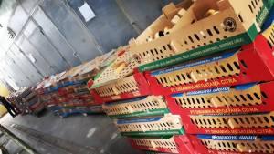 BOX DOC Ayam Kampung Super