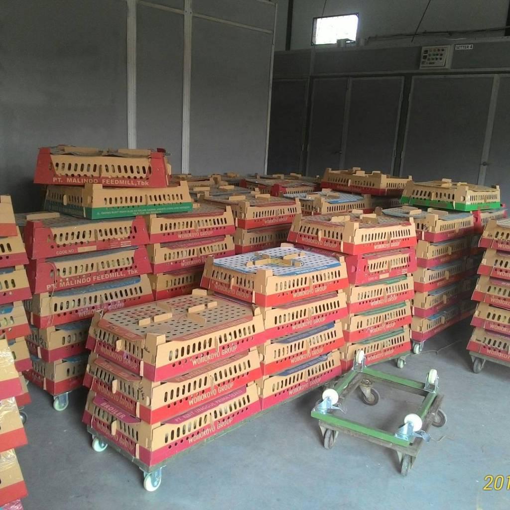 BOX DOC Ayam Kampung Super dan siap kirim ke seluruh wilayah di Indonesia | Image 3