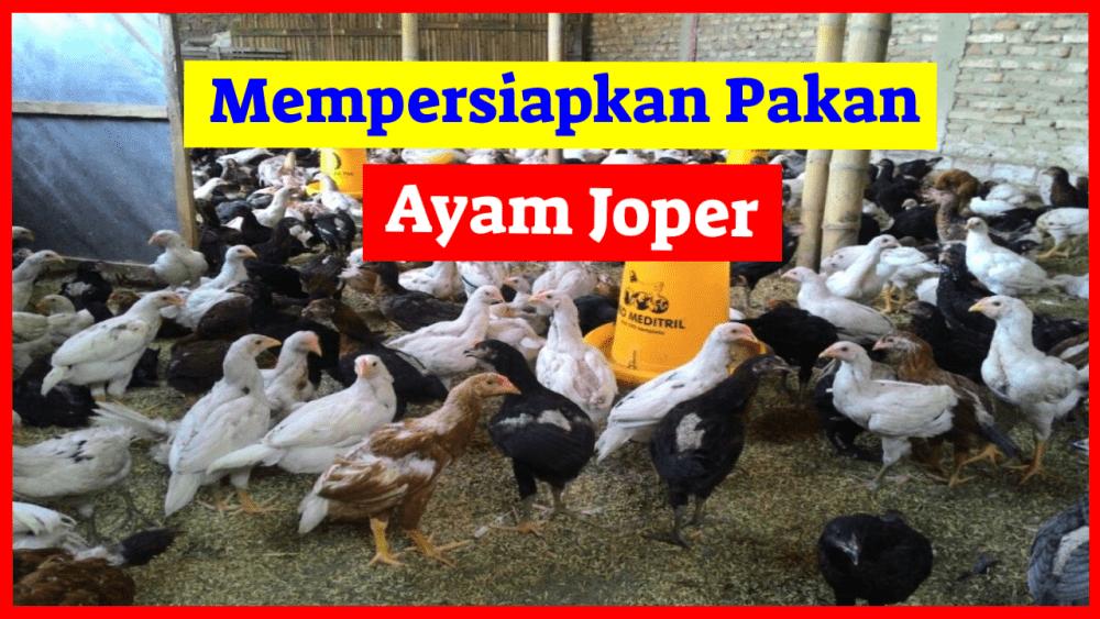 Mempersiapkan pakan ayam joper