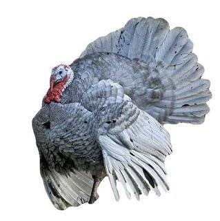Ayam Kalkun Blue Slate Image