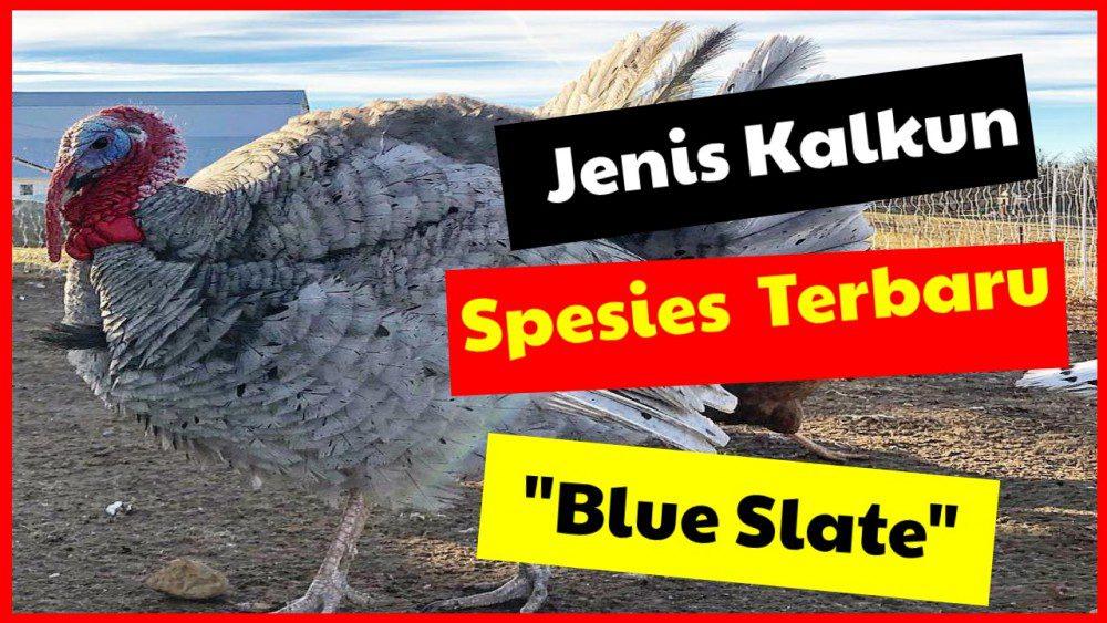 Kalkun Blue Slate