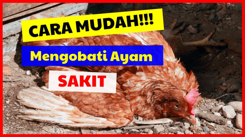 Cara Mudah Mengobati Penyakit Pada Ayam Serta Mengenal Ciri Ciri Penyakit Ayam