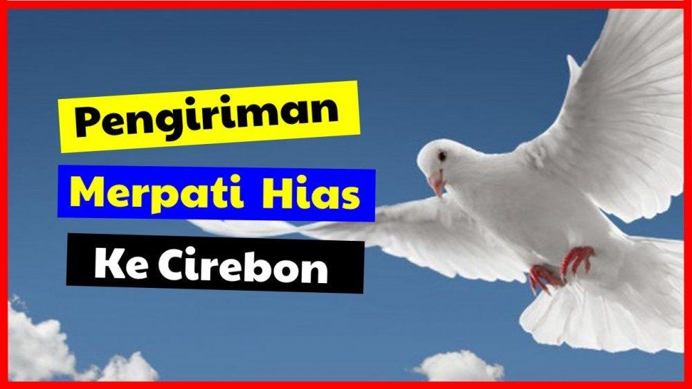 cropped pengiriman merpati ke cirebon Pengiriman Burung Merpati Jual Ayam Hias HP : 08564 77 23 888 | BERKUALITAS DAN TERPERCAYA Pengiriman Burung Merpati Pengiriman Burung Merpati Hias ke Cirebon