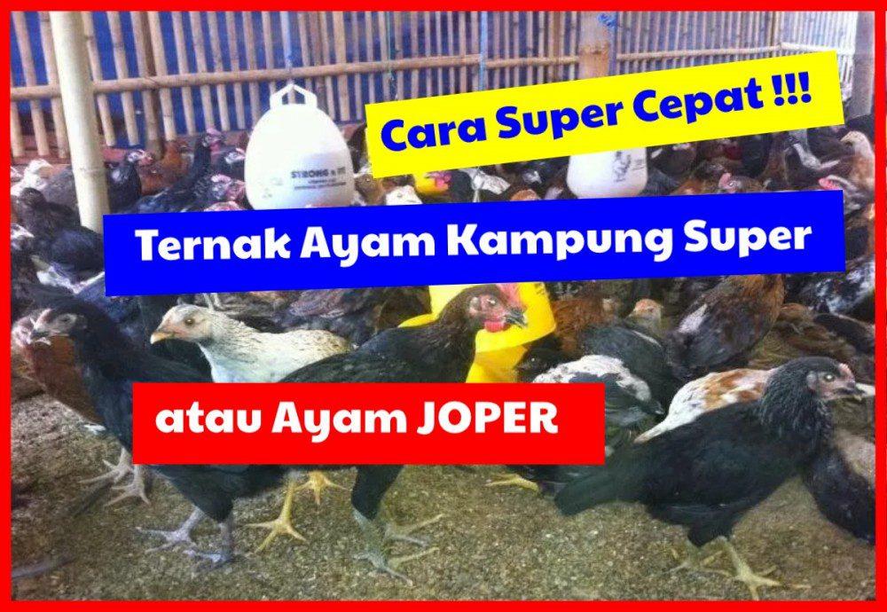 Cara Super Cepat !!!, Ternak Ayam kampung Super atau Joper