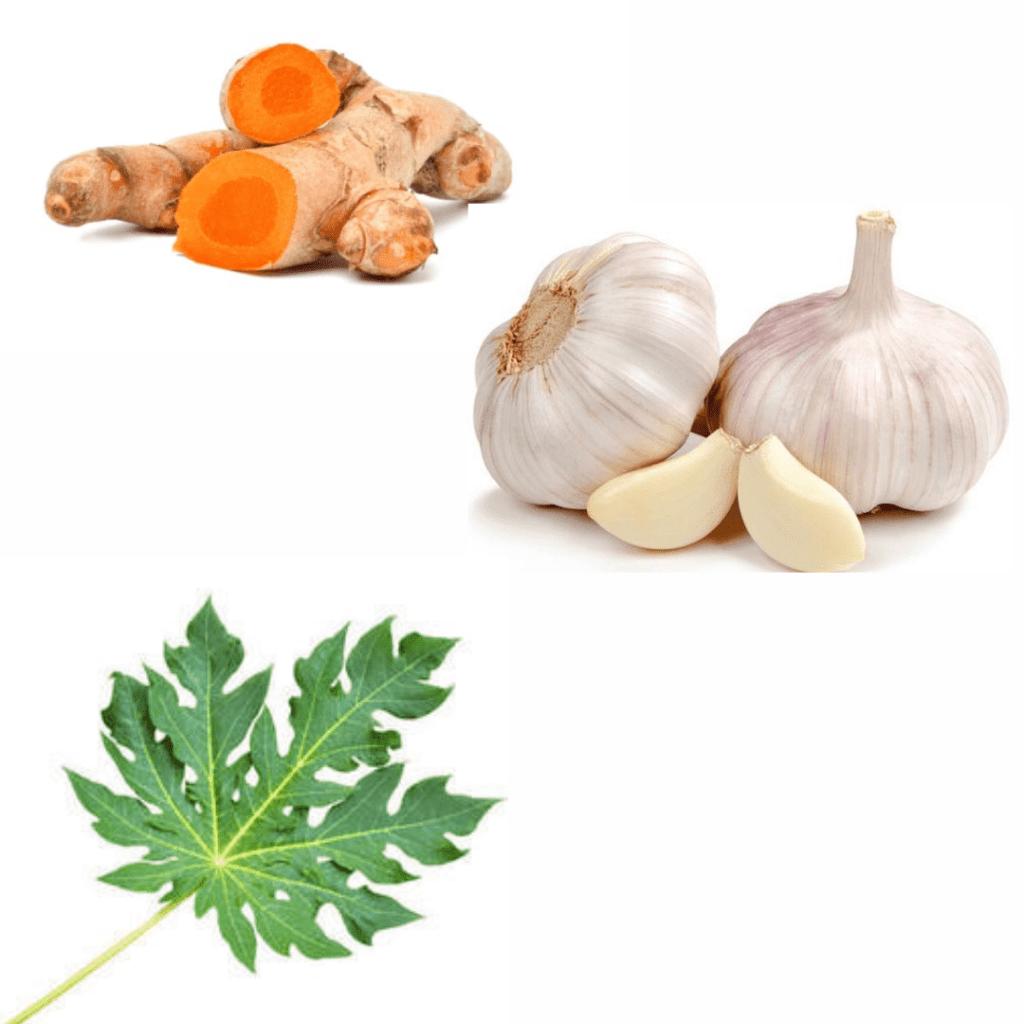 Campuran obat herbal kunyit, daun pepaya, dan bawang putih