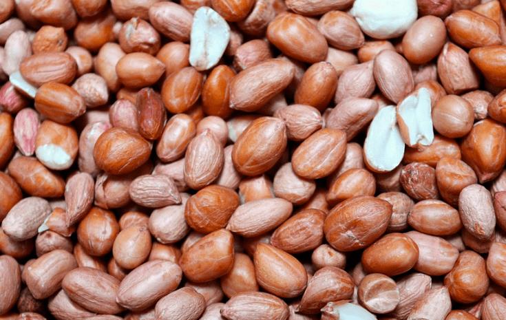 Kacang tanah juga dapat di gunakan sebagai pakan burung merpati | Kacang Tanah