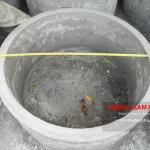 dimensi buis beton