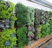jual-kantung-vertical-garden