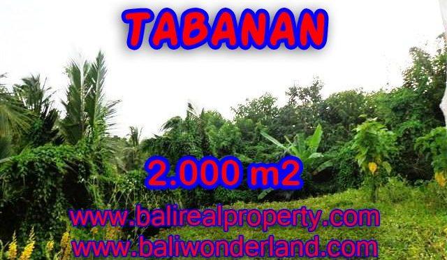 TANAH DIJUAL DI BALI, MURAH DI TABANAN HANYA RP 1.200.000 / M2