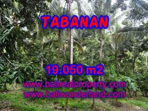 JUAL TANAH DI TABANAN BALI MURAH RP 200.000 / M2 - TJTB092