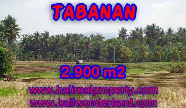 TANAH MURAH DI TABANAN DIJUAL RP 470.000 / M2 – TJTB136