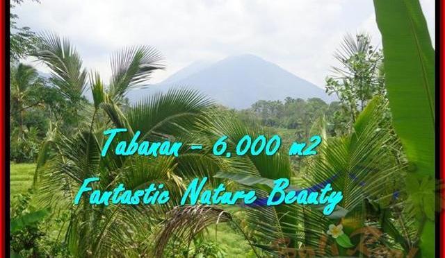 TANAH DIJUAL di TABANAN 6.000 m2 di Tabanan Penebel