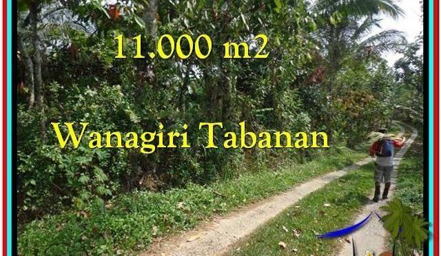 JUAL TANAH MURAH di TABANAN BALI 11.000 m2 di Tabanan Selemadeg