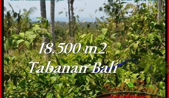 TANAH di TABANAN BALI DIJUAL MURAH 18,500 m2 di Tabanan Selemadeg