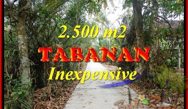 TANAH di TABANAN BALI DIJUAL MURAH Untuk INVESTASI TJTB160