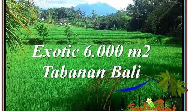 TANAH MURAH JUAL di TABANAN BALI 60 Are View sawah, sungai dan gunung