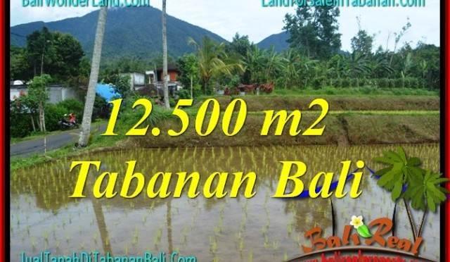 TANAH MURAH  di TABANAN BALI DIJUAL 12,500 m2  View gunung dan sawah