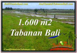 TANAH di TABANAN BALI DIJUAL 1,600 m2  View Laut, Gunung dan sawah