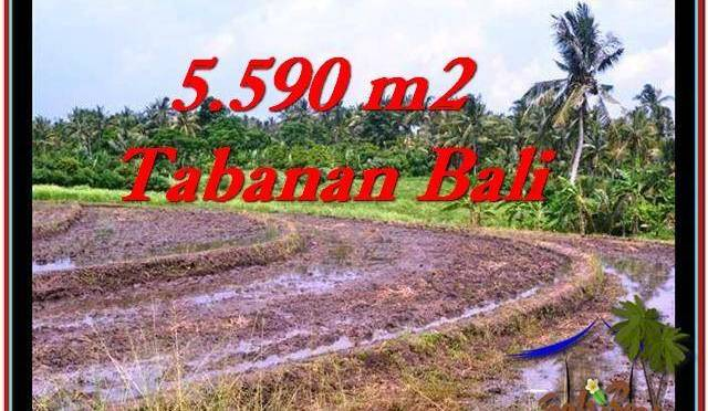 TANAH di TABANAN BALI DIJUAL MURAH 5,590 m2 di Tabanan Selemadeg