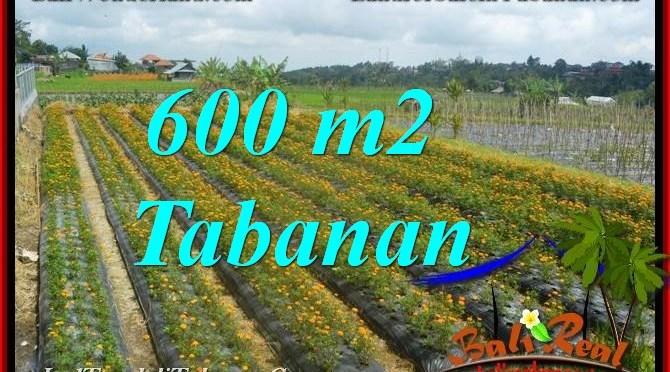TANAH MURAH  di TABANAN BALI DIJUAL 600 m2  view kebun dan Gunung