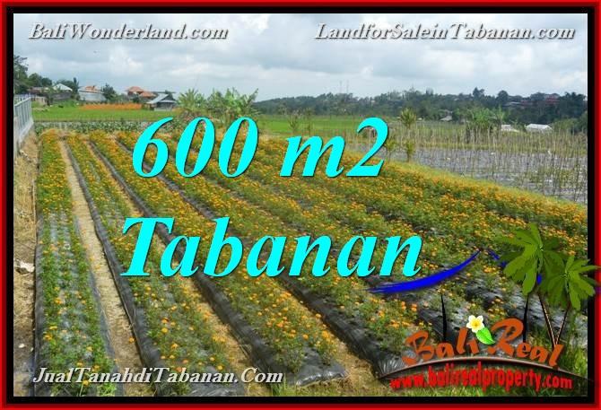 TANAH MURAH di TABANAN BALI DIJUAL 6 Are view kebun dan Gunung