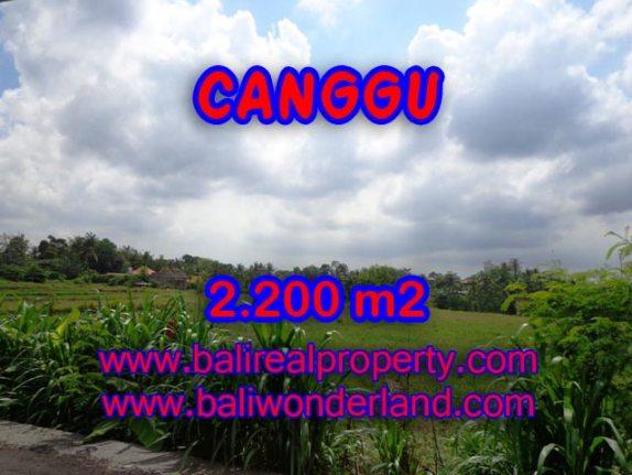 Tanah di Canggu dijual 22 Are View sawah di Tumbak Bayuh