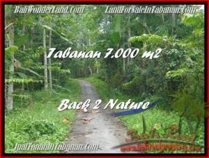JUAL TANAH di TABANAN BALI 7.000 m2  Gunung dan Kebun