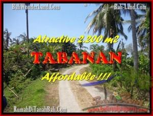 TANAH DIJUAL MURAH di TABANAN 22 Are di Tabanan Selemadeg