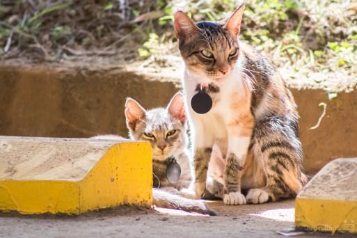 Gatos autónomos