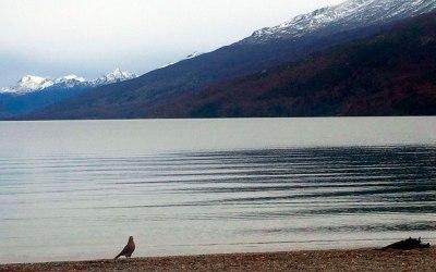 Bahia de Lapataia (Ushuaia)