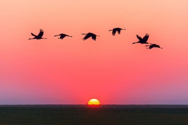 humor amid stress+birds-flying-sunset-ocean