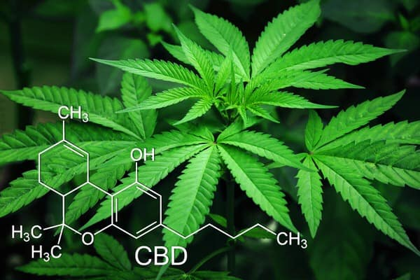 medical marijuana at midlife+cannabis-plant-cbd-chemical-formula