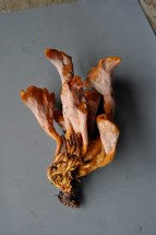 Clavulina craterelloides