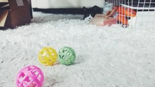 Kitler & her new toys!