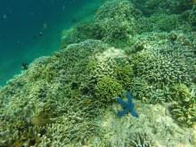 Snorkeling à Pemuteran