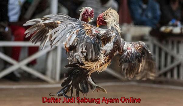 Daftar Judi Sabung Ayam Online