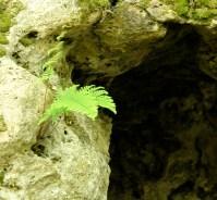 2. Opportunistic fern.