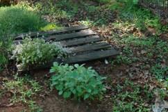 Pallet is great herb garden.
