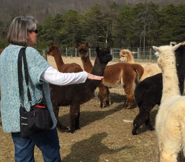 Leslie organized the herd.