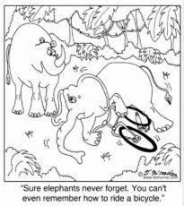 elephant_can_t_remember_how_to_ride_a_bike_postcard-r3ee9a2446d324d96b954577223d41f58_vgbaq_8byvr_512