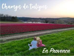 Des champs de tulipes en Provence
