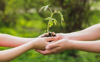 Judocy we Włoszech już sadzą drzewa.