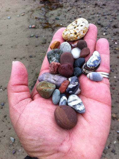San Simeon rock & shell collection